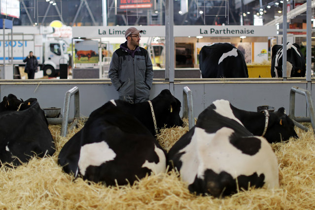 A French farmer stands with his livestock on the eve of the opening of the International Agricultura