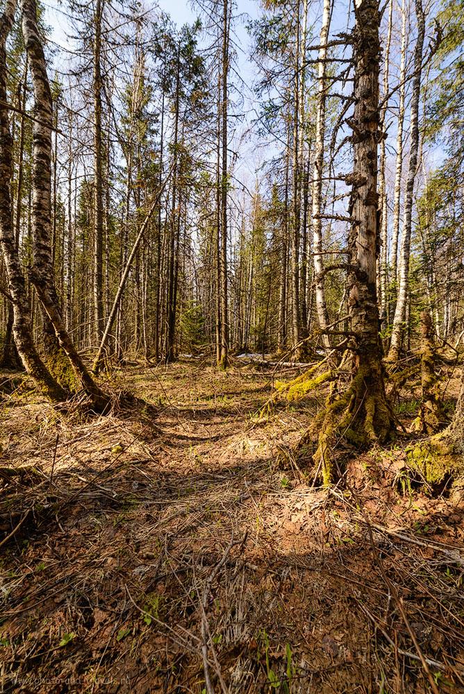 Фотография 13. Мохнатые деревья на горе Зюраткуль. Отзывы о походе выходного дня в Челябинской области. 1/250, -1.0, 9.0, 400, 14.