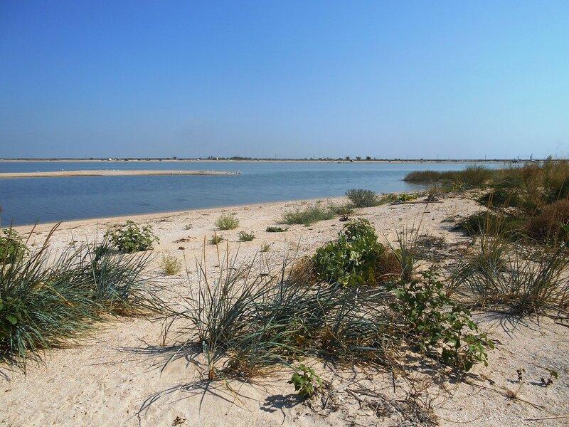 На проливе, пески, растительность ... DSCN8175.JPG