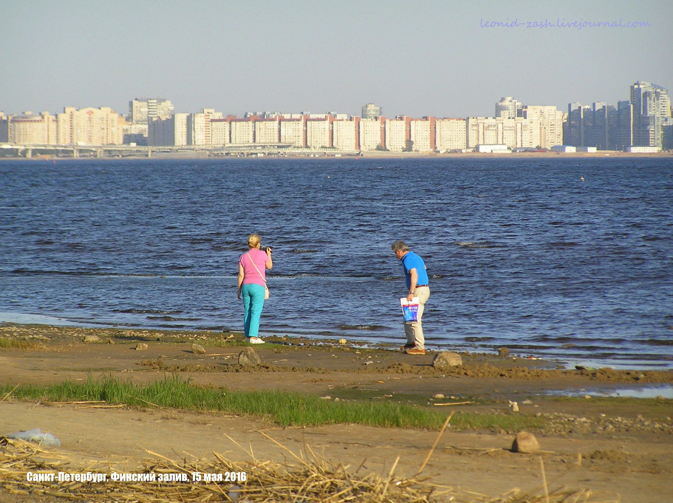 Финский залив 26.JPG