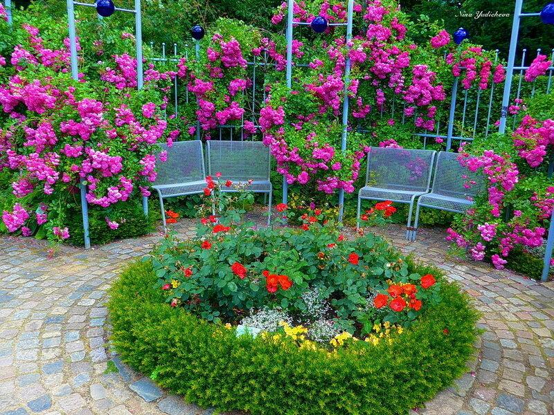 Уютно присесть под розами