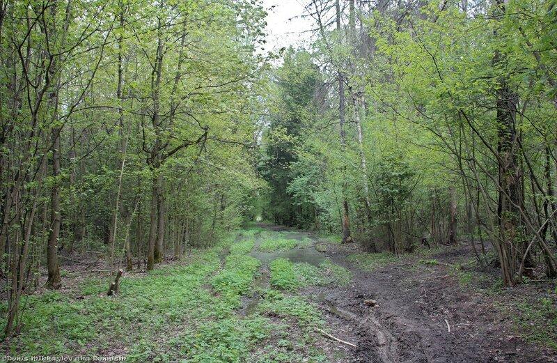 Молодую вывезли в лес