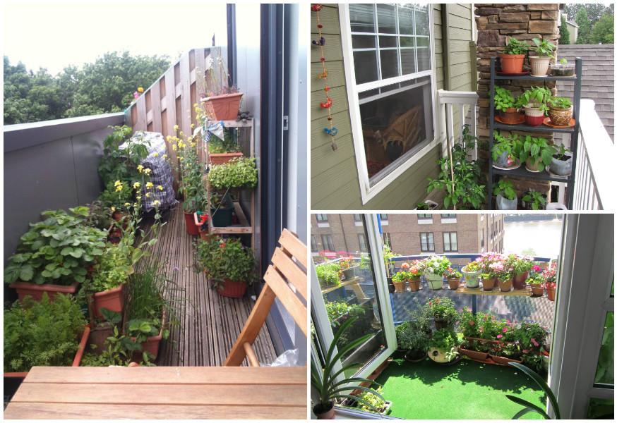 Огород на балконе, идеи в фотографиях
