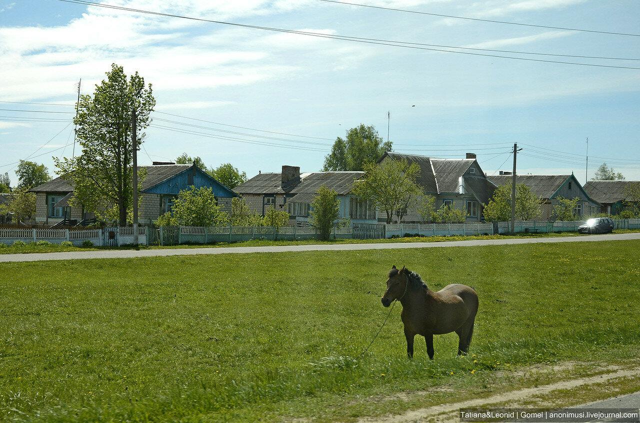 Беларусь моя, ненаглядная