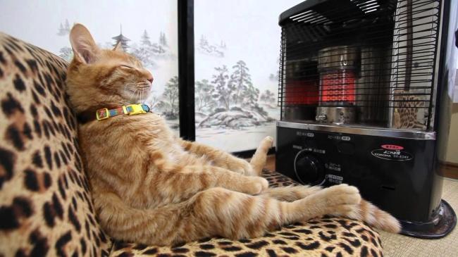 © youtube  Кот, который знает толк врасслаблении.
