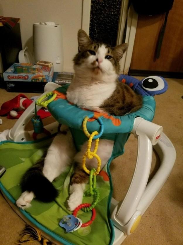 Где ж еще коту посидеть, как не в детском креслице?!