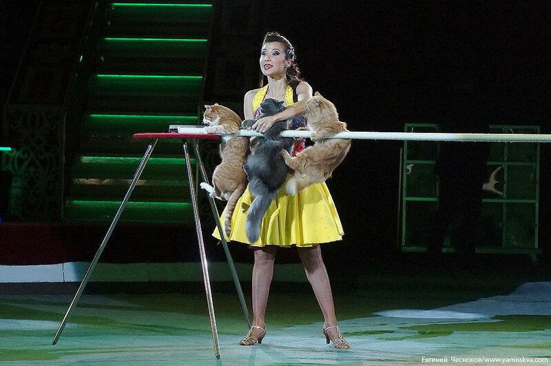 Осень. БРАВО. кошки. А.Саралаева. 14.10.16.03..jpg