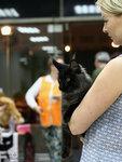 Выставка кошек Чудово 18.06.2016