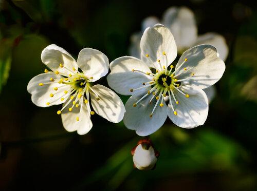 Там будут сны цветов и вещих книг играть весну во тьме тысячелетья...