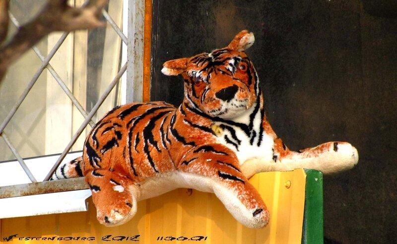 1156.01 Тигр. 6 мар. 2012 г.