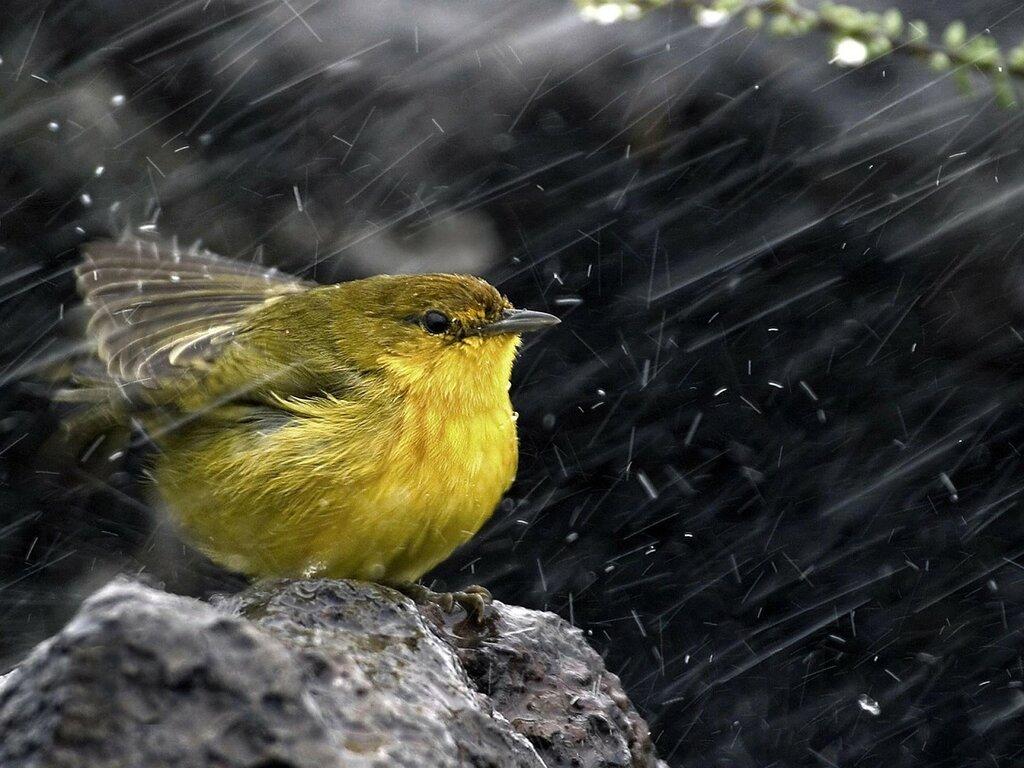 rain-city-birds-free-hd-298880.jpg