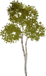 kimla_littlegarden_tree.png