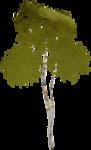 kimla_littlegarden_tree.png