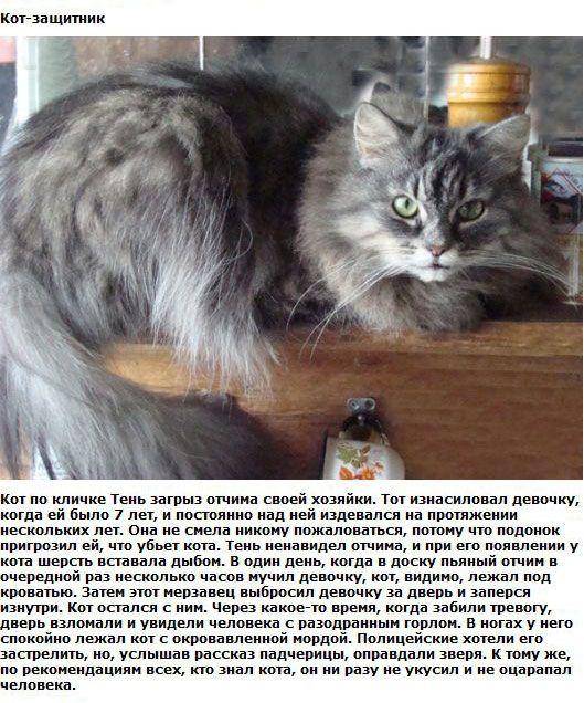 http://img-fotki.yandex.ru/get/6100/130422193.ea/0_76153_afbfccb1_orig