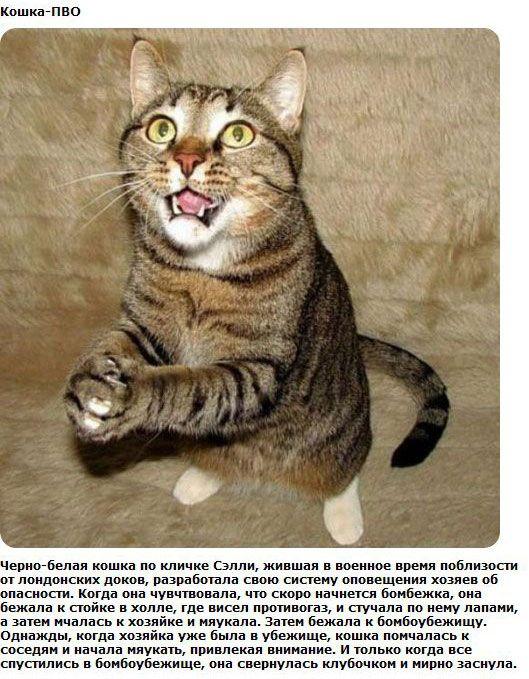 http://img-fotki.yandex.ru/get/6100/130422193.ea/0_76154_303c38d9_orig