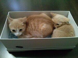 Как приручить котят CAM00515_.jpg
