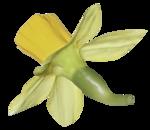 natali_design_easter_flower12.png