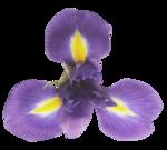 natali_design_easter_flower13.png