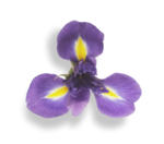 natali_design_easter_flower13-sh2.png