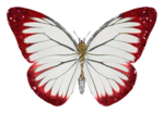 «Laitha_s_Microferk_Alluring»  0_807fc_ad42f798_S