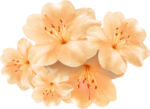 VerenaDesigns_EverythingBloomsInSpring_el13.png