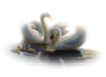 Птицы  разные  0_81ef5_3b957679_S