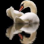 Птицы  разные  0_81ef6_16af6541_S