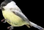 Птицы  разные  0_81efb_50a1ec54_S