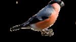 Птицы  разные  0_81efc_26c5b234_S