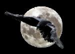 Птицы  разные  0_81f00_2cecec89_S