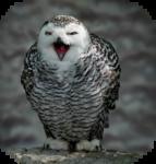 Птицы  разные  0_81f06_7e17768b_S