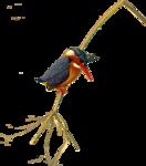 Птицы  разные  0_81f0a_204abe6_S