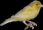 Птицы  разные  0_81f12_f183296c_S