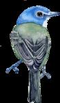 Птицы  разные  0_81f1c_c4027bed_S