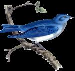 Птицы  разные  0_81f24_821f94d_S