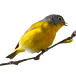 Птицы  разные  0_81f26_d5998175_S