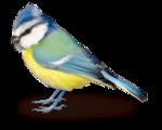 Птицы  разные  0_81f2a_3c77db52_S