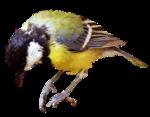 Птицы  разные  0_81f36_3b9a2b6d_S