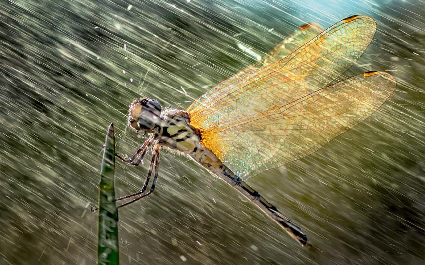 9. Укрылся от дождя. (Фото Geert Weggen):