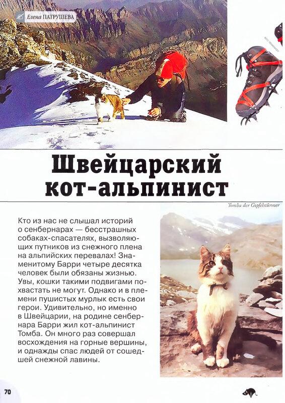 Кот швейцарский