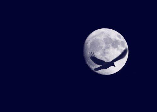 Луна и ворона (коллаж).