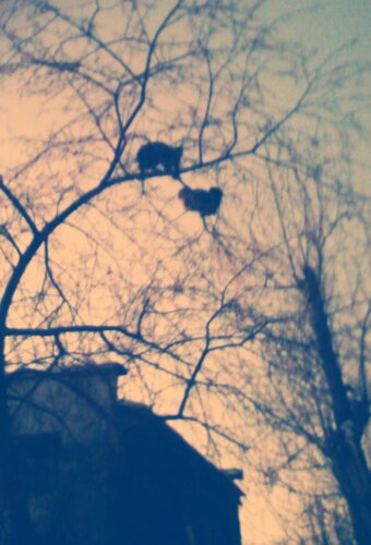 Коты на ветках