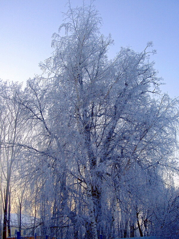 Зима,с.Остров,зимние узоры
