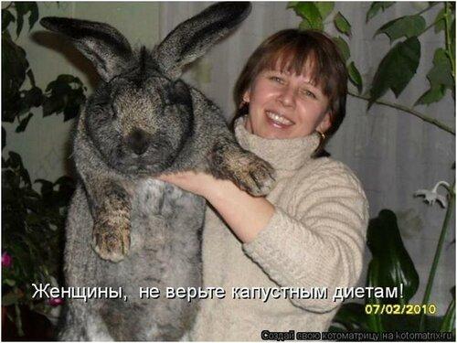 Правильное содержание декоративных кроликов включает в себя не только разнообразное питание, уборку в клетке и расчесанную шерстку