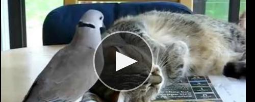 Прикольный будильник для кота