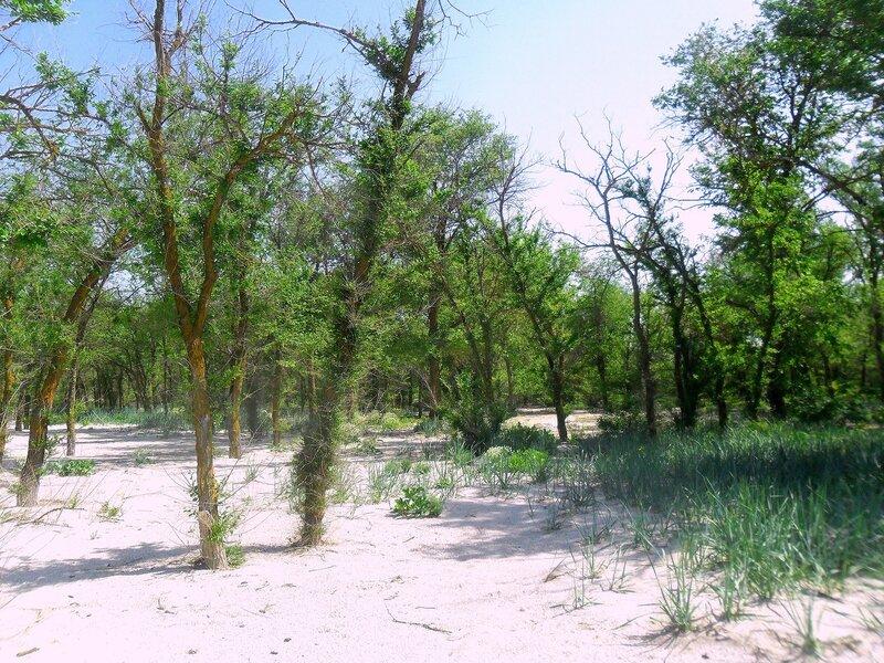 Побережье Азовское, май