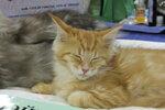 Мартовские котятки