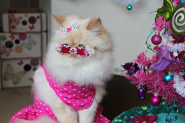 картинки котики с украшениями отличается мясистыми насыщенными