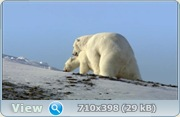 Застывшая планета / Frozen Planet (2011) Blu-ray + BDRip 1080 / 720p + HDRip