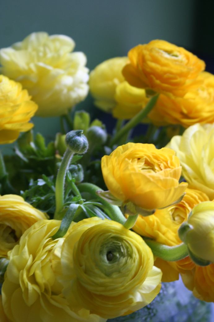 ... Katerina Monakhova Ranunculus Yellow flowers Flowers Colorful roses